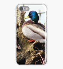 Mallards iPhone Case/Skin