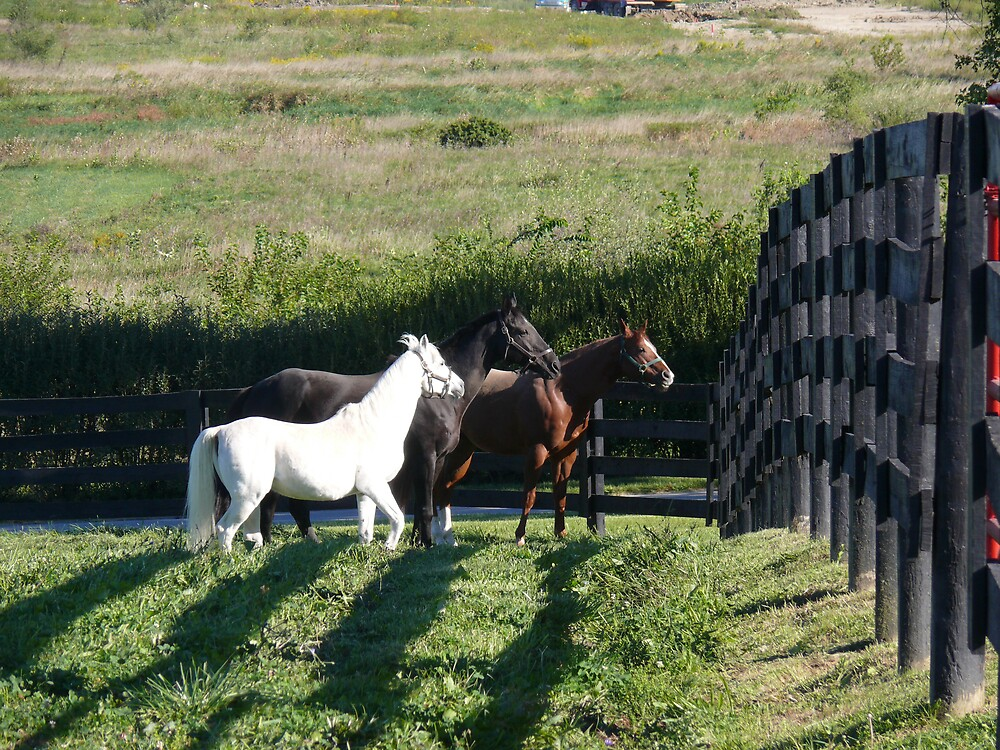 Horses of a different color by RayG