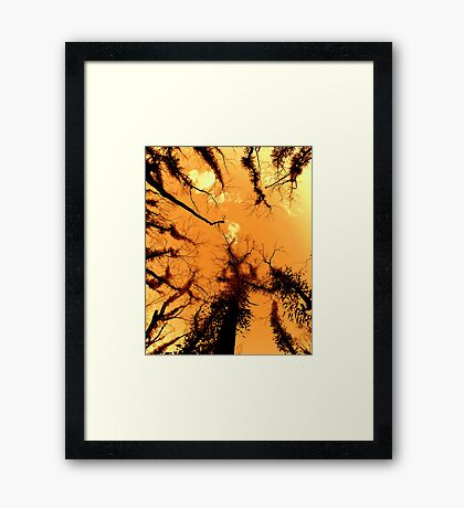 Forest Fire... Framed Print
