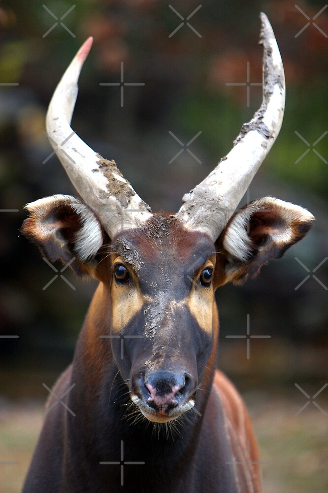 Bongo Beauty by Lisa G. Putman