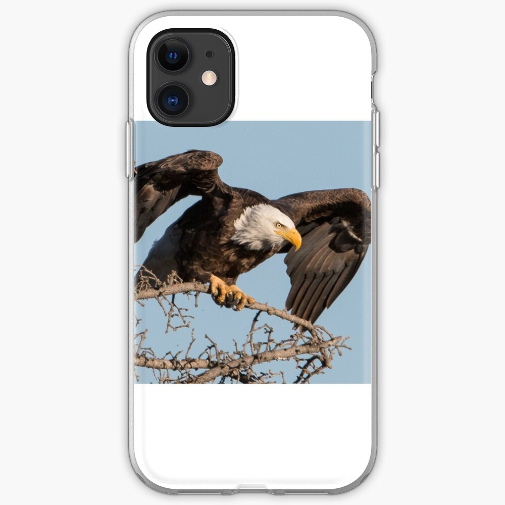 Bald Eagle: prelaunch wing test iPhone Case & Cover