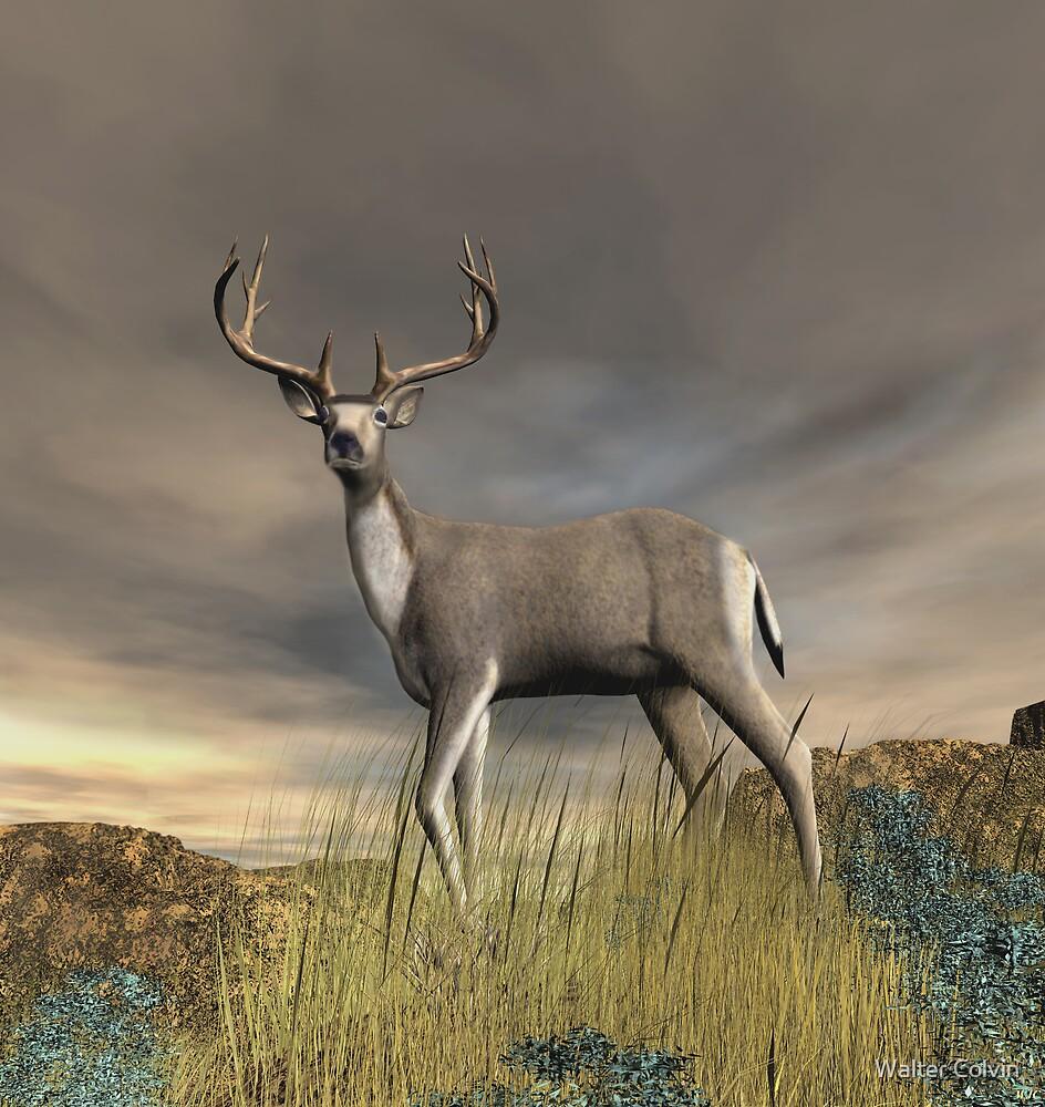 Trophy Buck by Walter Colvin