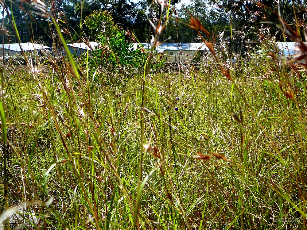 NATURAL WILD GRASSES REPLACED BY NEW HOMES by Ekascam