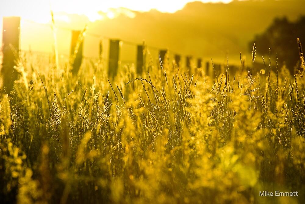 Golden haze by Mike Emmett