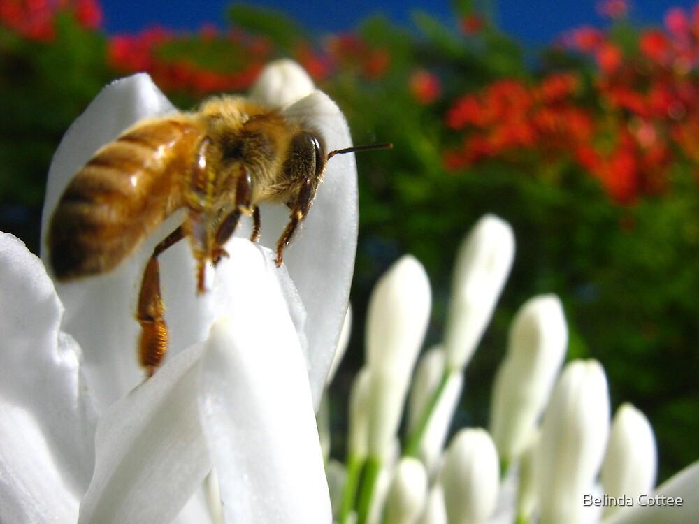 busy bee by Belinda Cottee