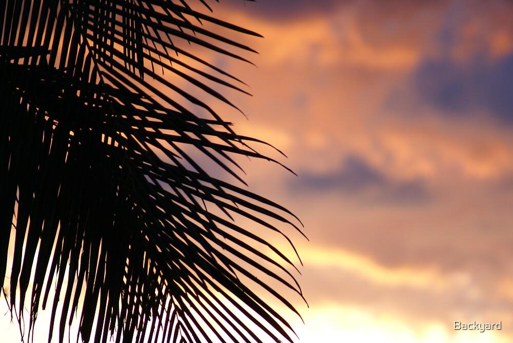 Palms on Sunset by Backyard