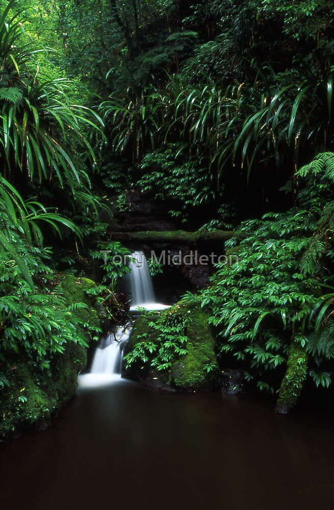 sub-tropical rainforest - Lamington NP, Qld. by Tony Middleton