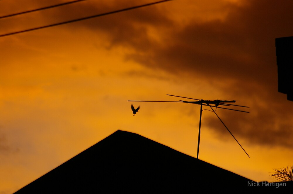 Flying Free In The Orange Ocean by Nick Hartigan