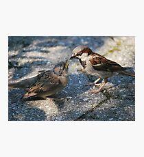 Bird feeding Bird Photographic Print