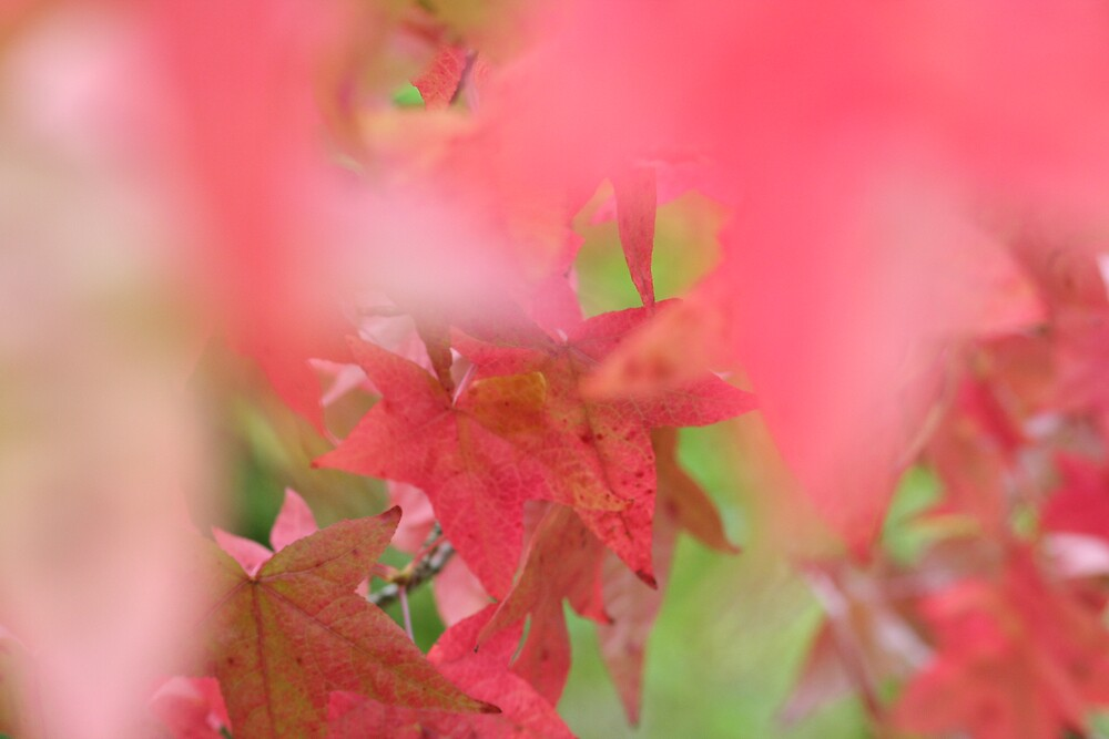 Fall Colours by Vanessa Combes