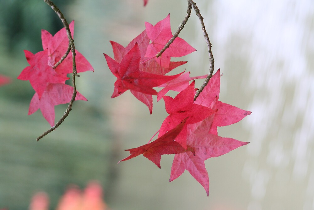 Leaves in Red by Vanessa Combes