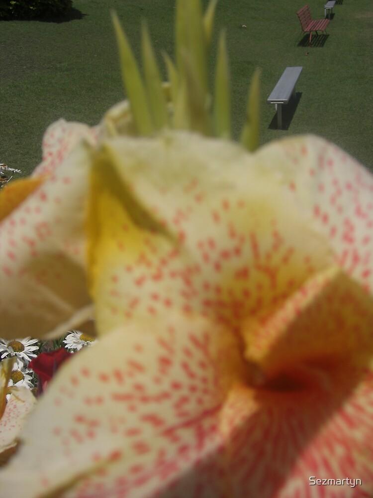 White flowers by Sezmartyn