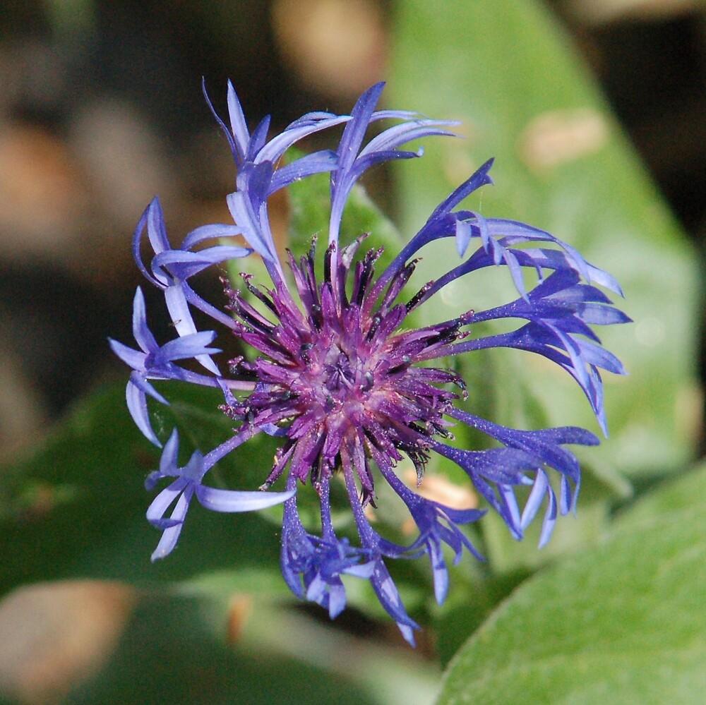 Flower 3 by Ted  van Eck