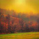 Autumn Fog by Robert Burns Miller