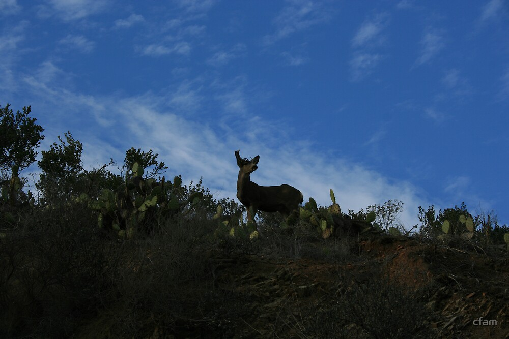 Catalina Deer by cfam