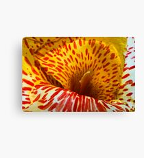 Canna lily Canvas Print