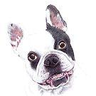 French Bulldog illustration by lpodraw