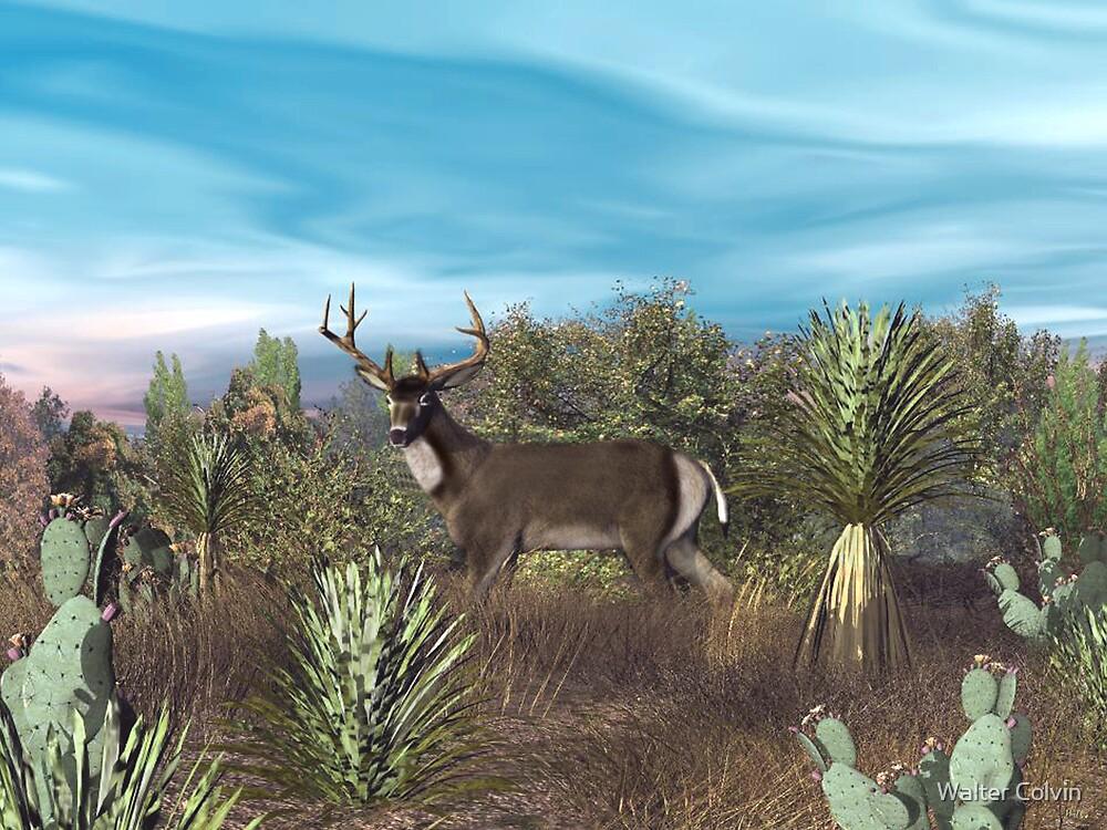 Texas Mule Deer by Walter Colvin