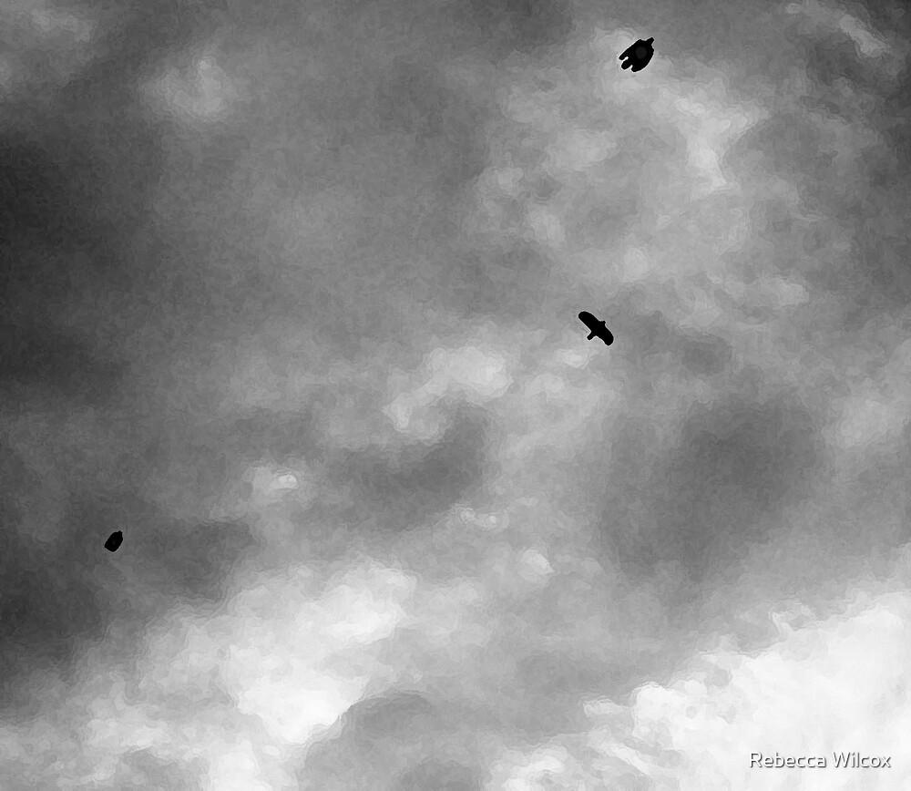 Dark Skies by Rebecca Brann