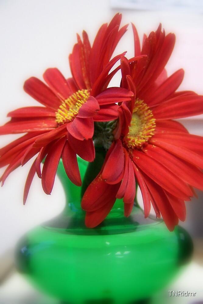 Twin Flowers by TNRidrnr