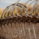Rib Cage by coopphoto