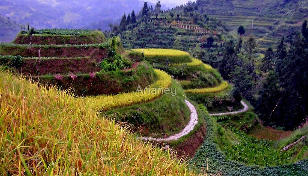 Longsheng Rice Terraces Up Close by Arianey