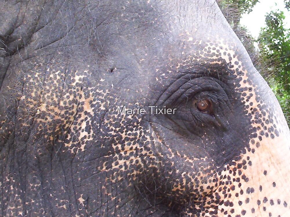 sri lankan temple elephant by Marie Tixier
