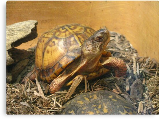 Slow and Steady by Nichole Schoff