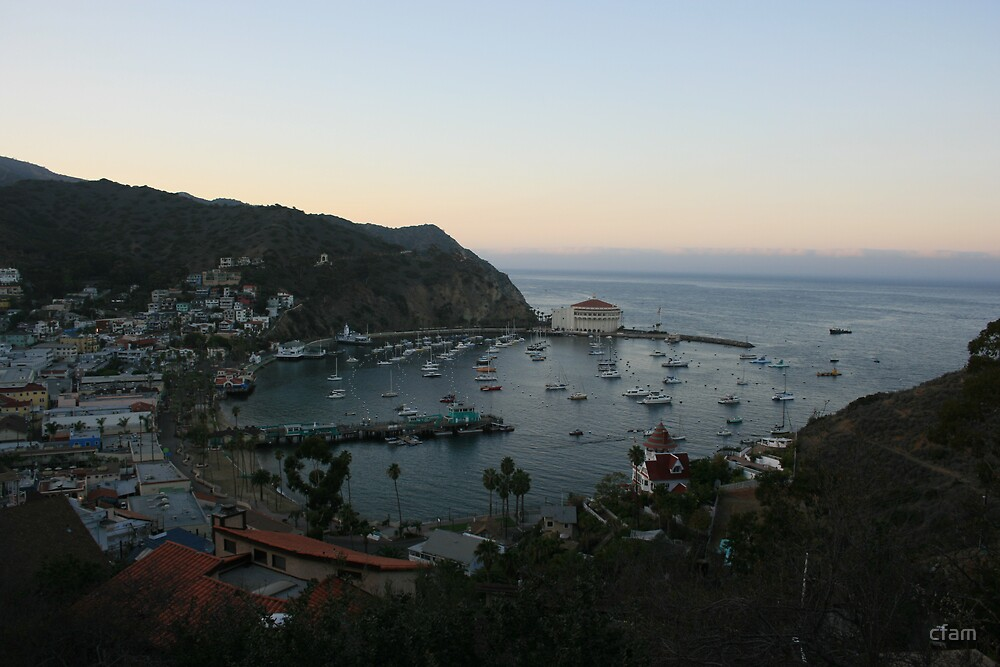 Catalina Island View of the Bay at Dusk by cfam