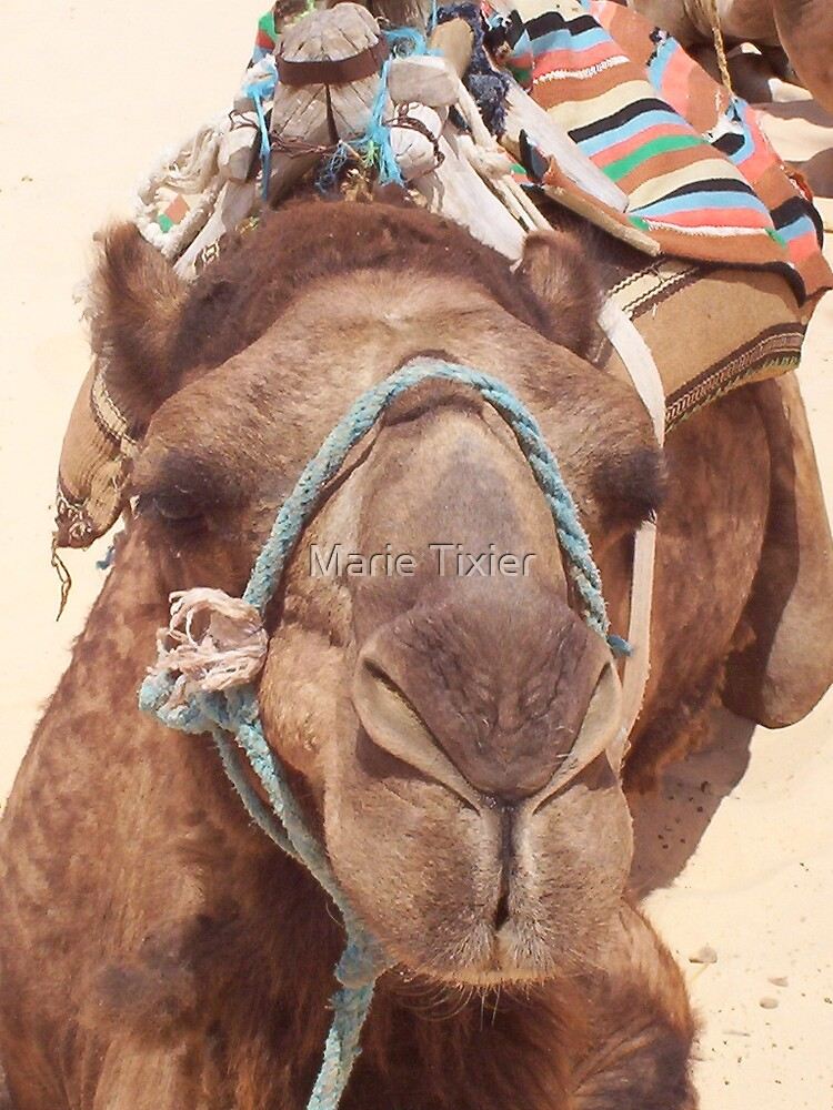 camel by Marie Tixier