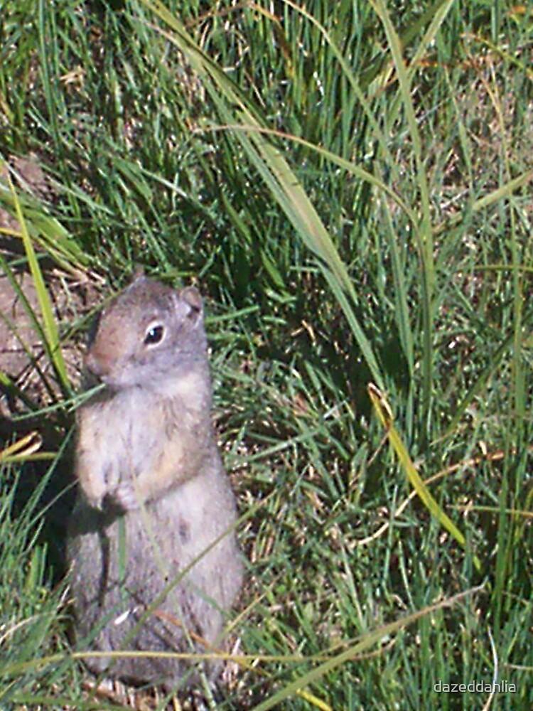Ground Squirrel Poses by dazeddahlia
