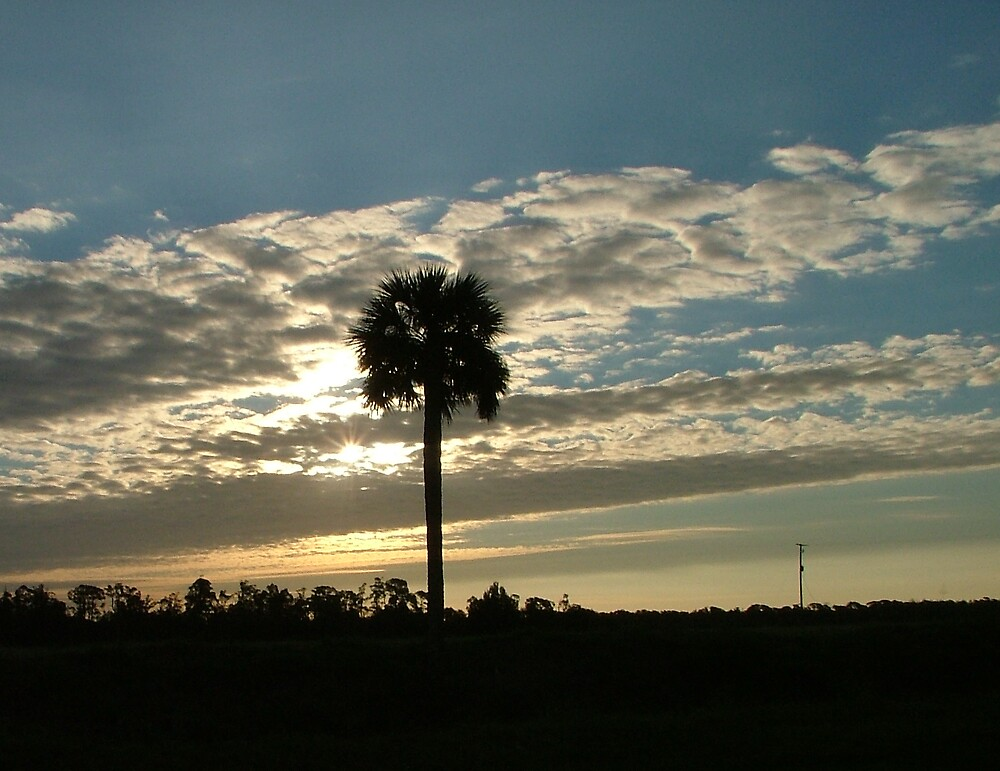 Palm Tree Sunrise by Ferguson