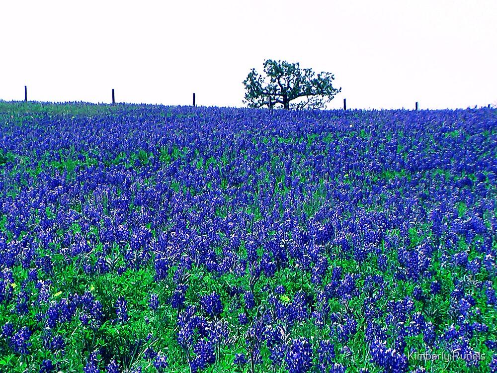 Bluebonnets in Bloom by Kimberly Runels