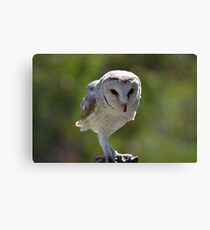 Casper - Australian barn owl Canvas Print