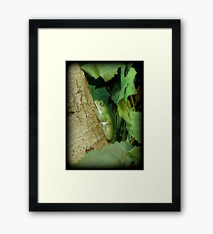 Mexican Leaf Frog Framed Print