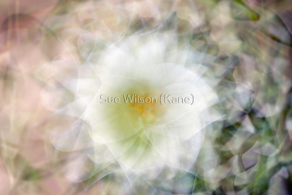In a twirl by Sue Wilson (Kane)