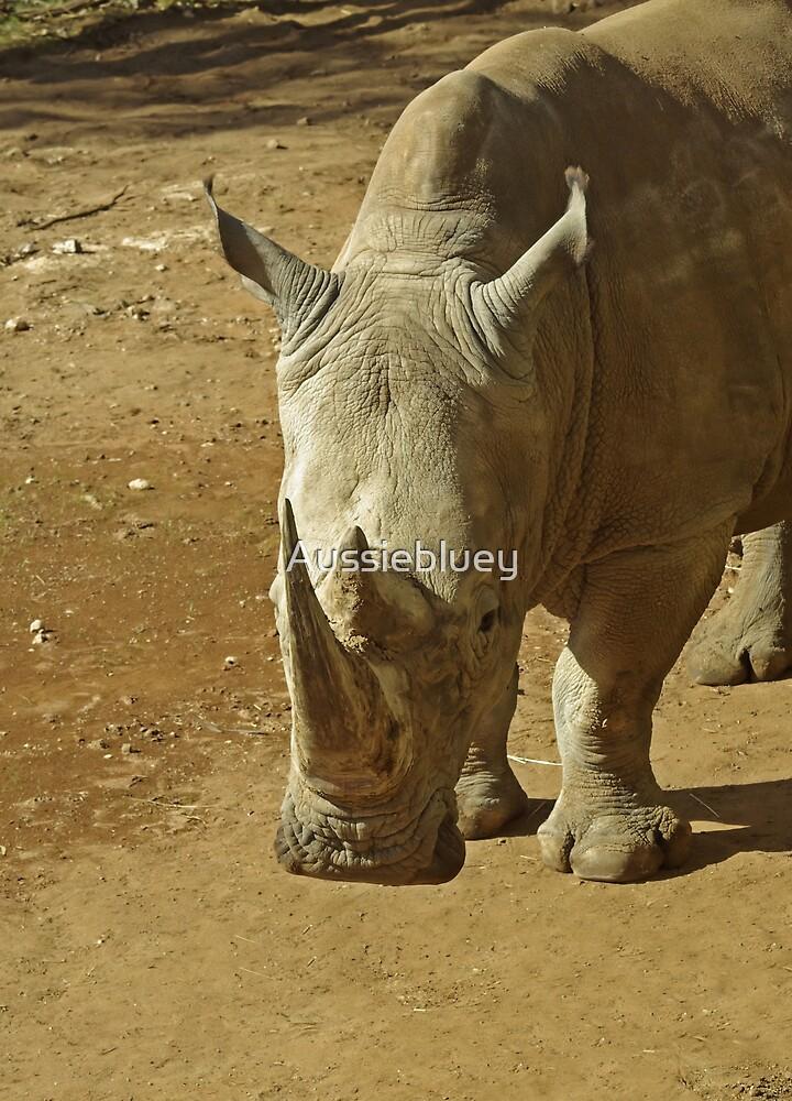 Rhino by Aussiebluey
