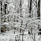 The Forest is Dusted With Snow - After the Storm 10-Mar-2017 by Jane Neill-Hancock