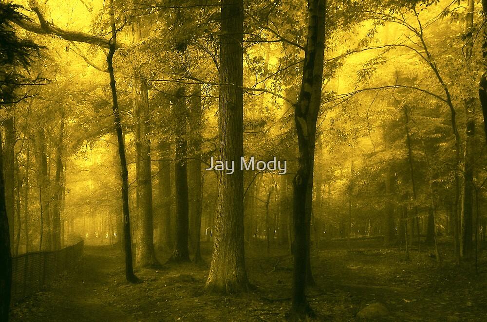 Quietude by Jay Mody