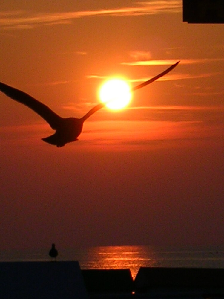 Seagull on sunset by altix