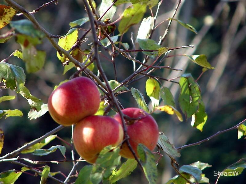 An Apple A Day by StuartW