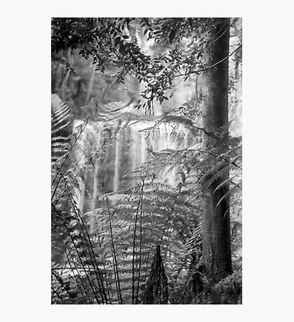 Waterfall, Southern Tasmania Photographic Print