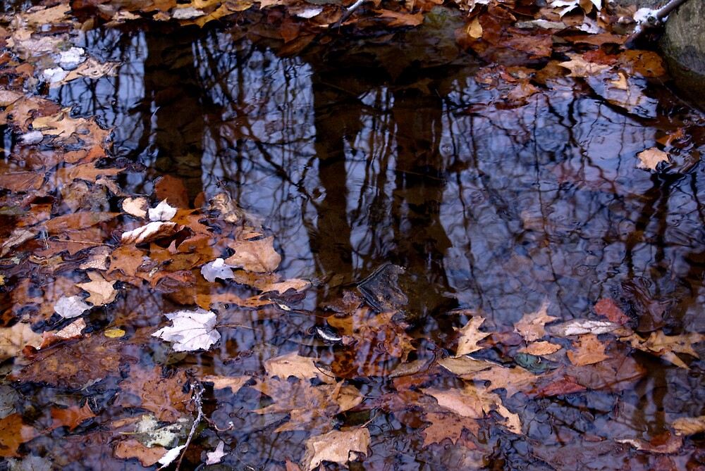 Reflections Of Fall by Rod  Adams