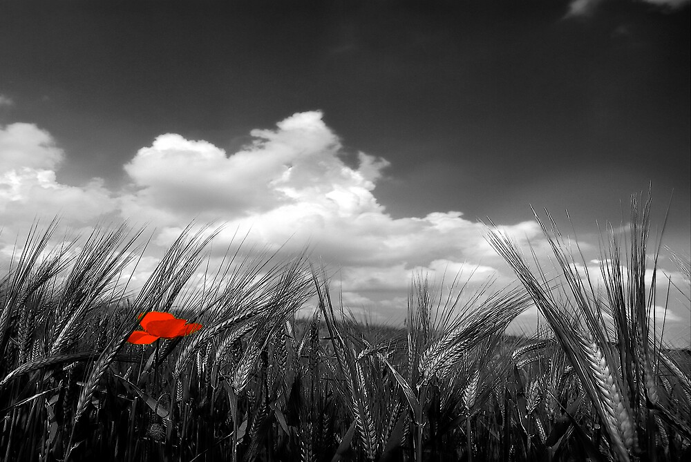 1 point of red by Philippe Sainte-Laudy