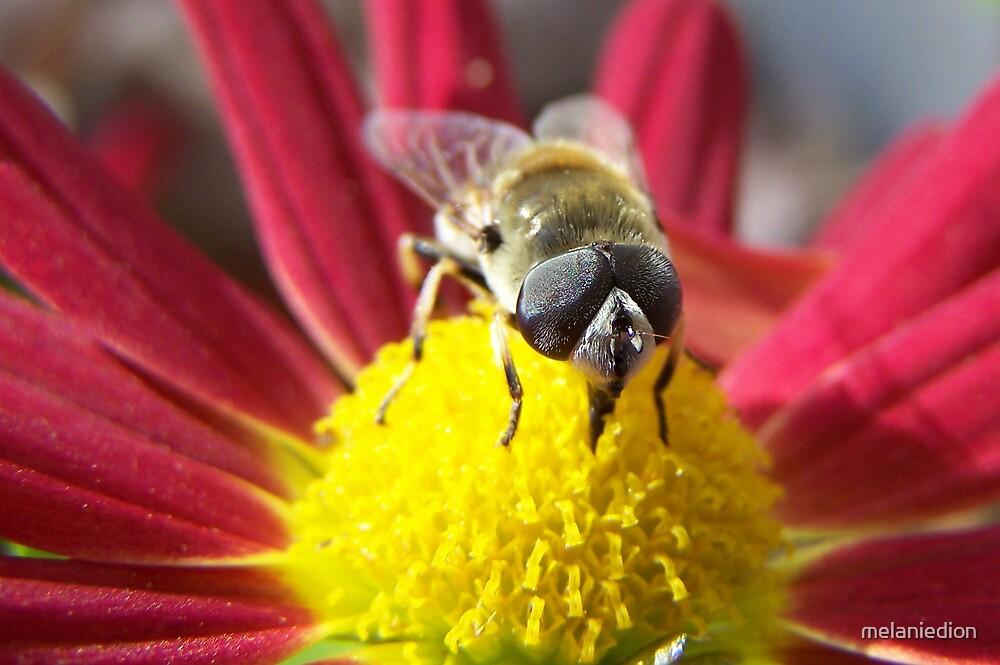 Big Bee by melaniedion