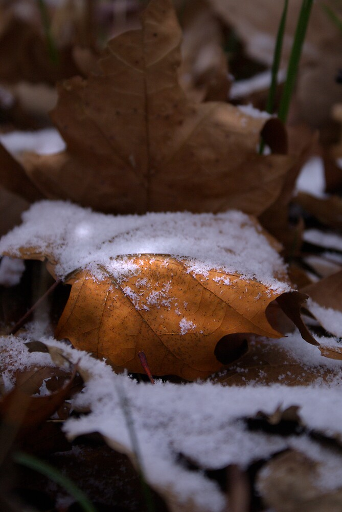 Fall Meets Winter by Rod  Adams