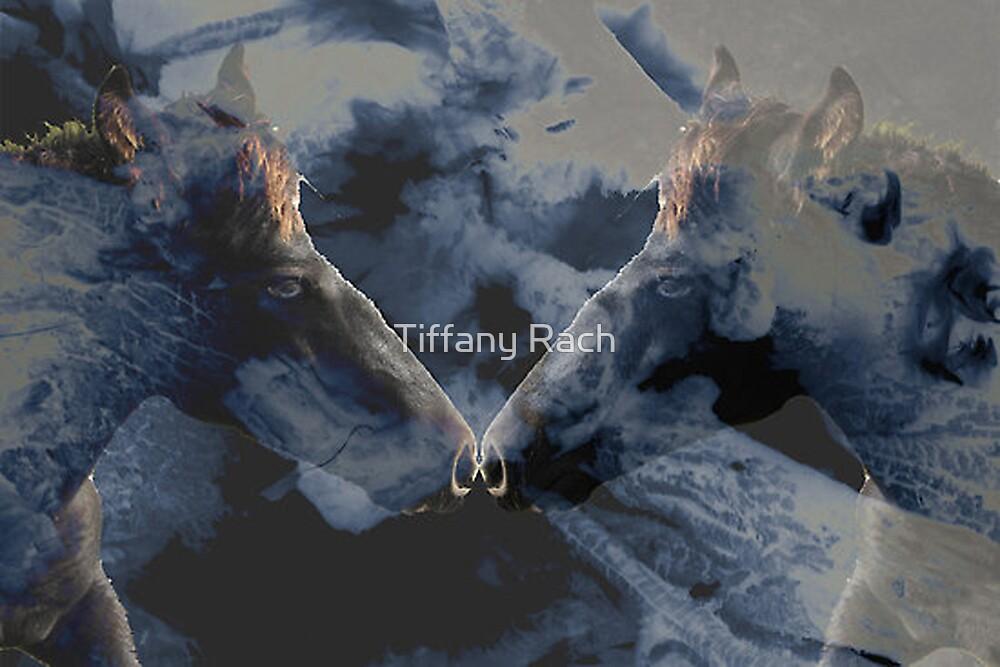 Mystic Colt by Tiffany Rach