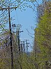 Telephone Poles by FrankieCat