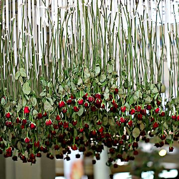 Red Roses and White Ribbons by KarenTregoning