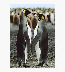 Penguin Love Photographic Print